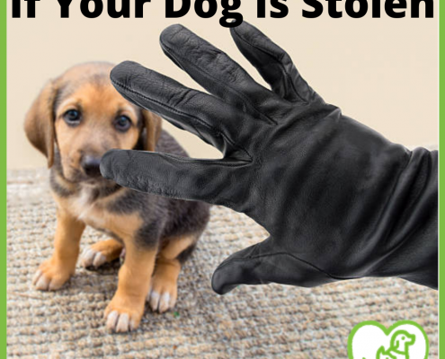 If your dog is stolen